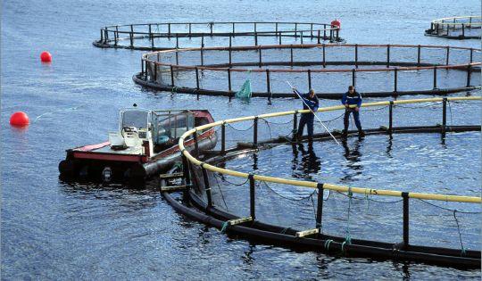 Illustrasjon-akvakultur